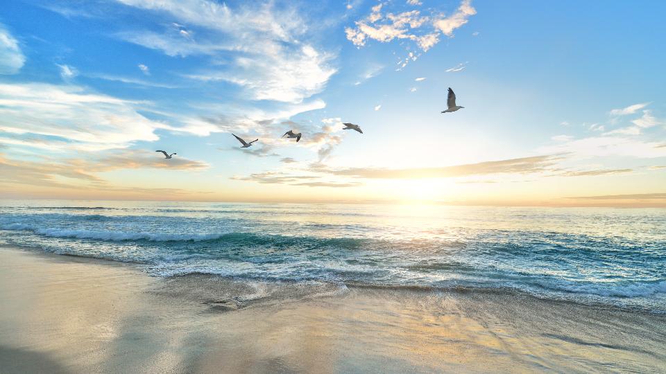 关注海洋生态,保护海洋环境