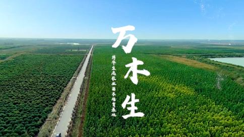 苗木宣传片