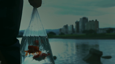陈粒MV 《爱完不完》
