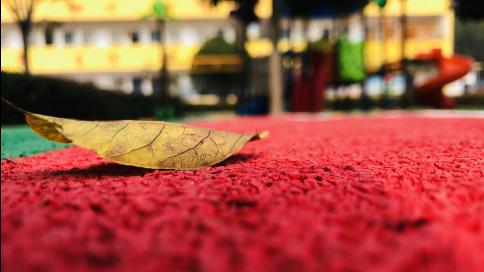 学校的树叶