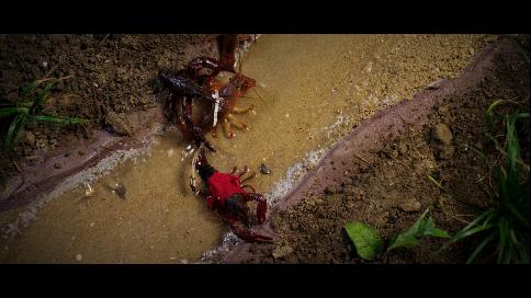 进击的小龙虾·天猫生鲜