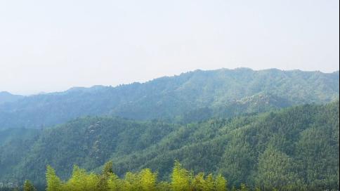 竹海-宜豐竹子之鄉