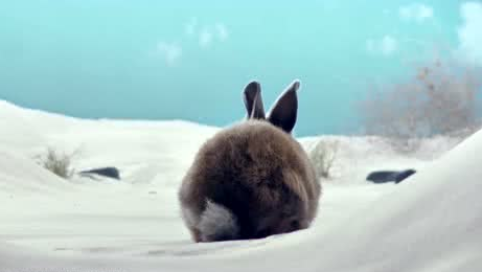 高通推出令人驚嘆的5G系列:龜兔新番