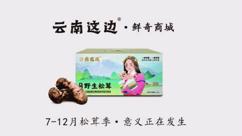 《松茸》产品宣传片云南这边