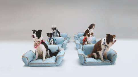 蔚來汽車——狗狗片