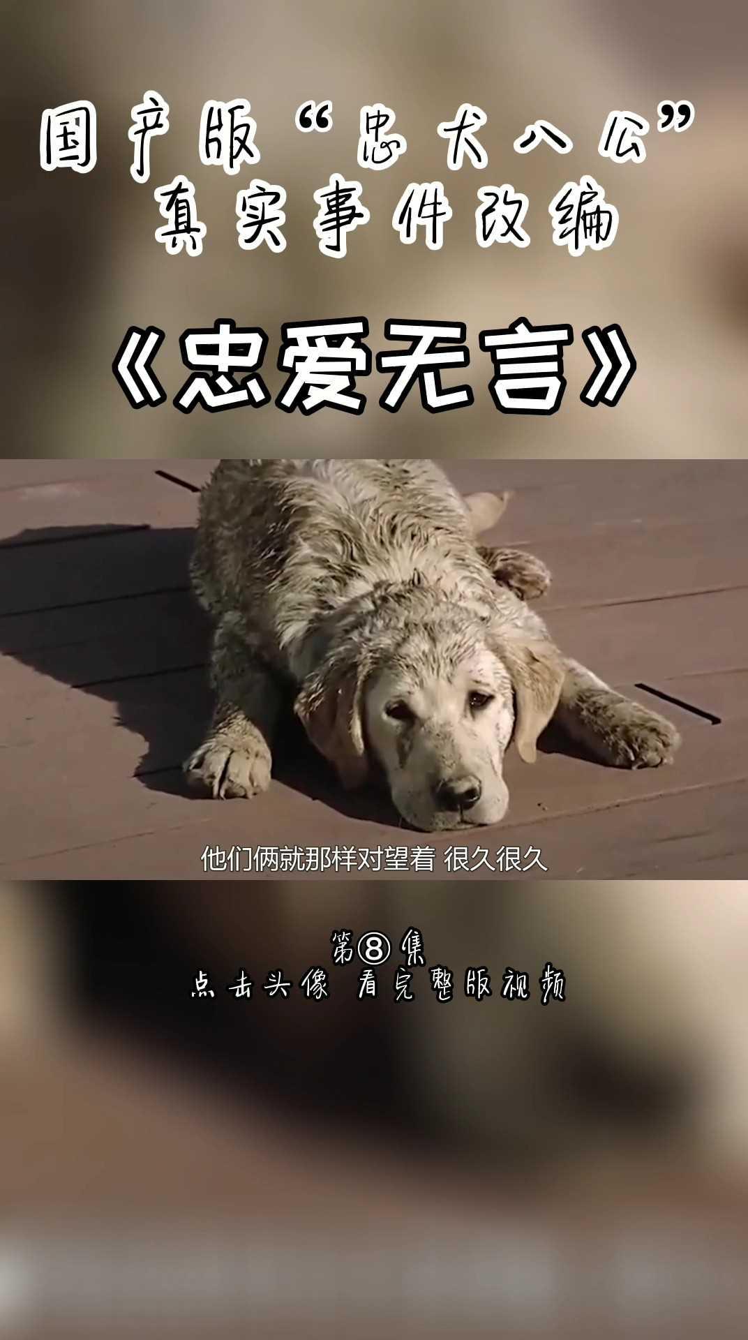 国产版忠犬八公《忠爱无言》第八集 下