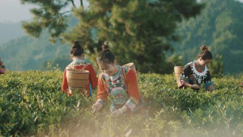 《湖南省茶文化研究协会》茶文化推广宣传片