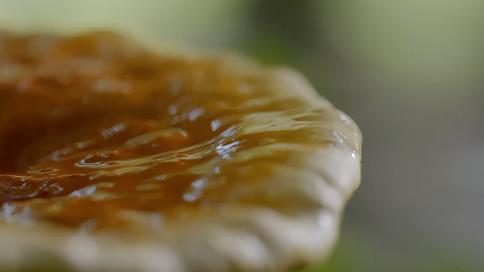 最爱的药用大蘑菇