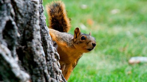 有一只成精的松鼠是什么体验?