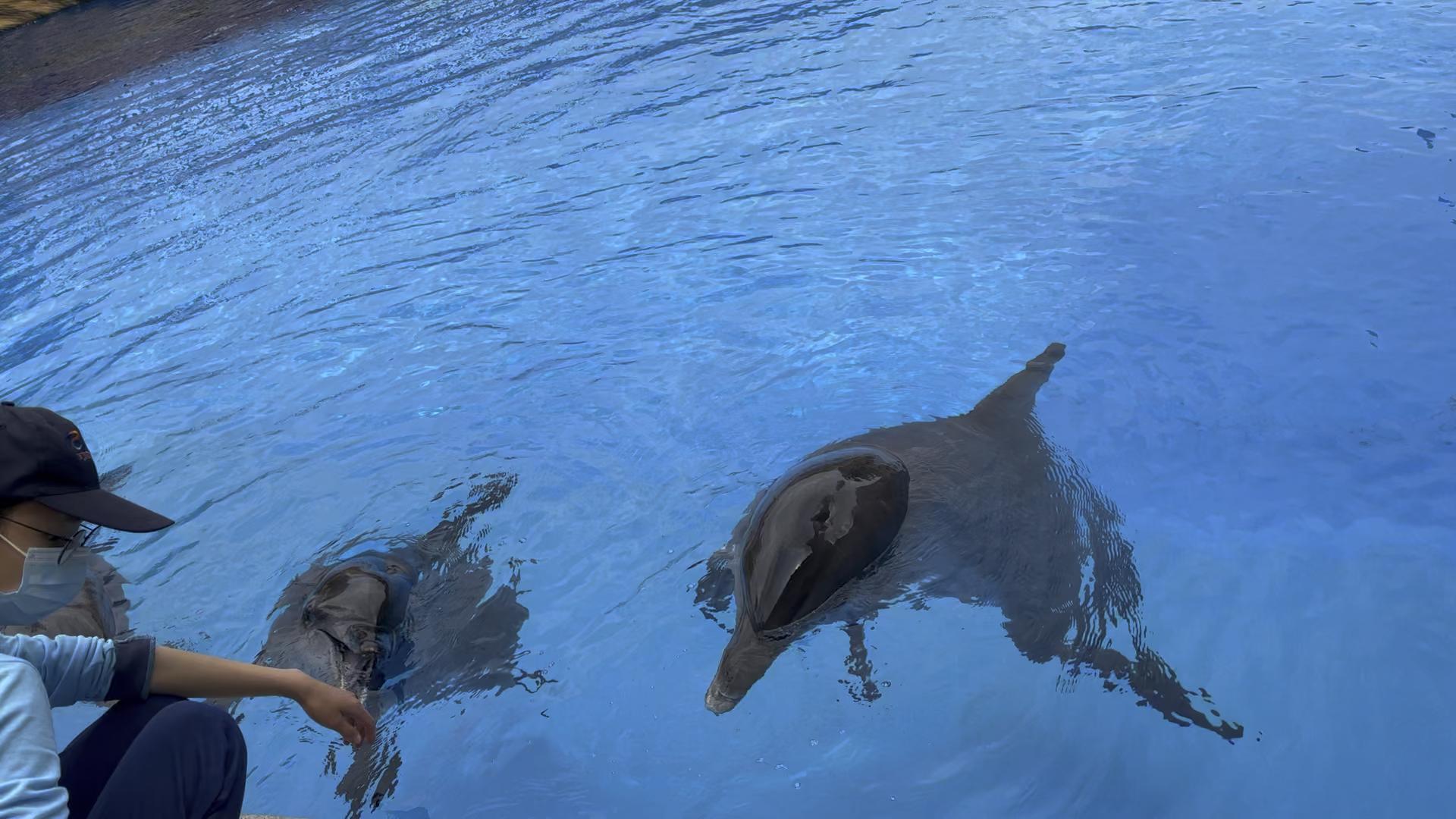 美丽的海豚湾