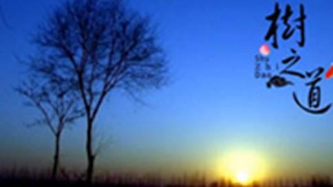 微电影《树之道》