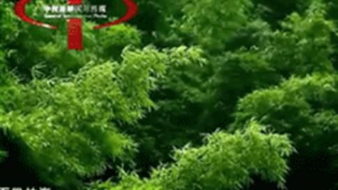 重庆市梁平县旅游形象片