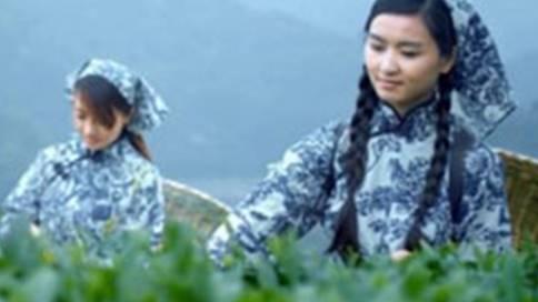 湖南安化华莱健黑茶广告片