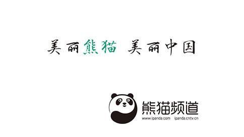 熊猫频道TVC